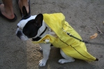 Banana dog